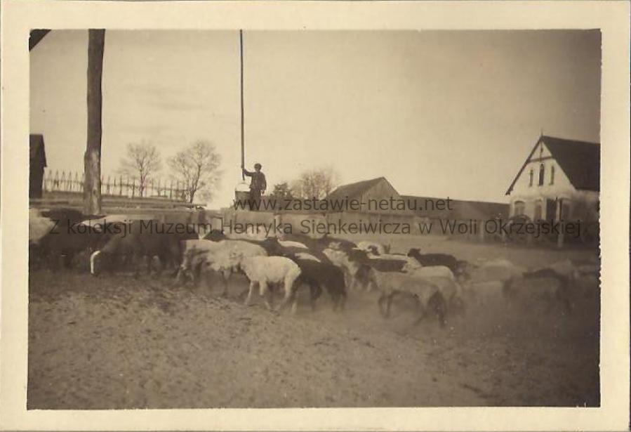 owieczki przy wodzie