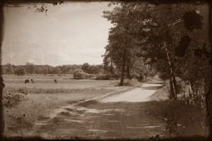 Łąki na Załawcu